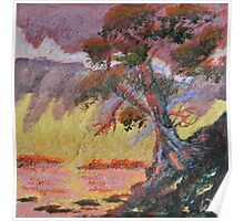 Cypress Sun Poster
