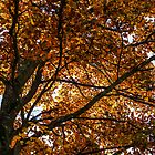 Changing Leaves Of Autumn by MorganaPhoto