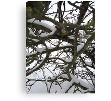 Through winter branches Canvas Print