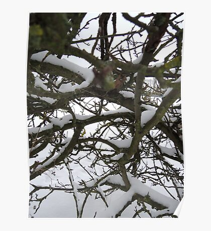 Through winter branches Poster