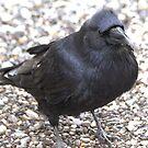 Raven by Kathi Arnell