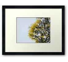 Wattle's Out Framed Print