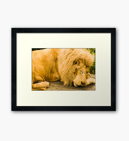 Sleeping Predator Framed Print