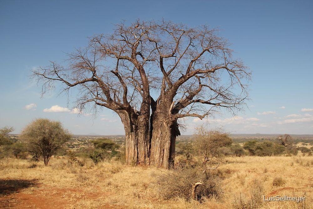 Baobab Tree by LuisSellmeyer