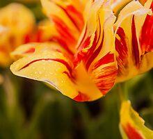 Botanical Spring Morning by Ty Helton