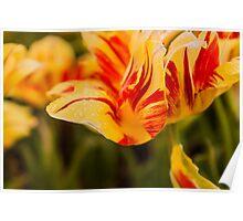 Botanical Spring Morning Poster