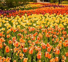 Botanical Garden by Ty Helton