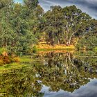 Wonga Reflections - Wonga Wetlands, Albury NSW - The HDR Experience by Philip Johnson