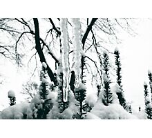 Icicle Buddies Photographic Print