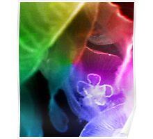 Rainbow Jellyfish Poster