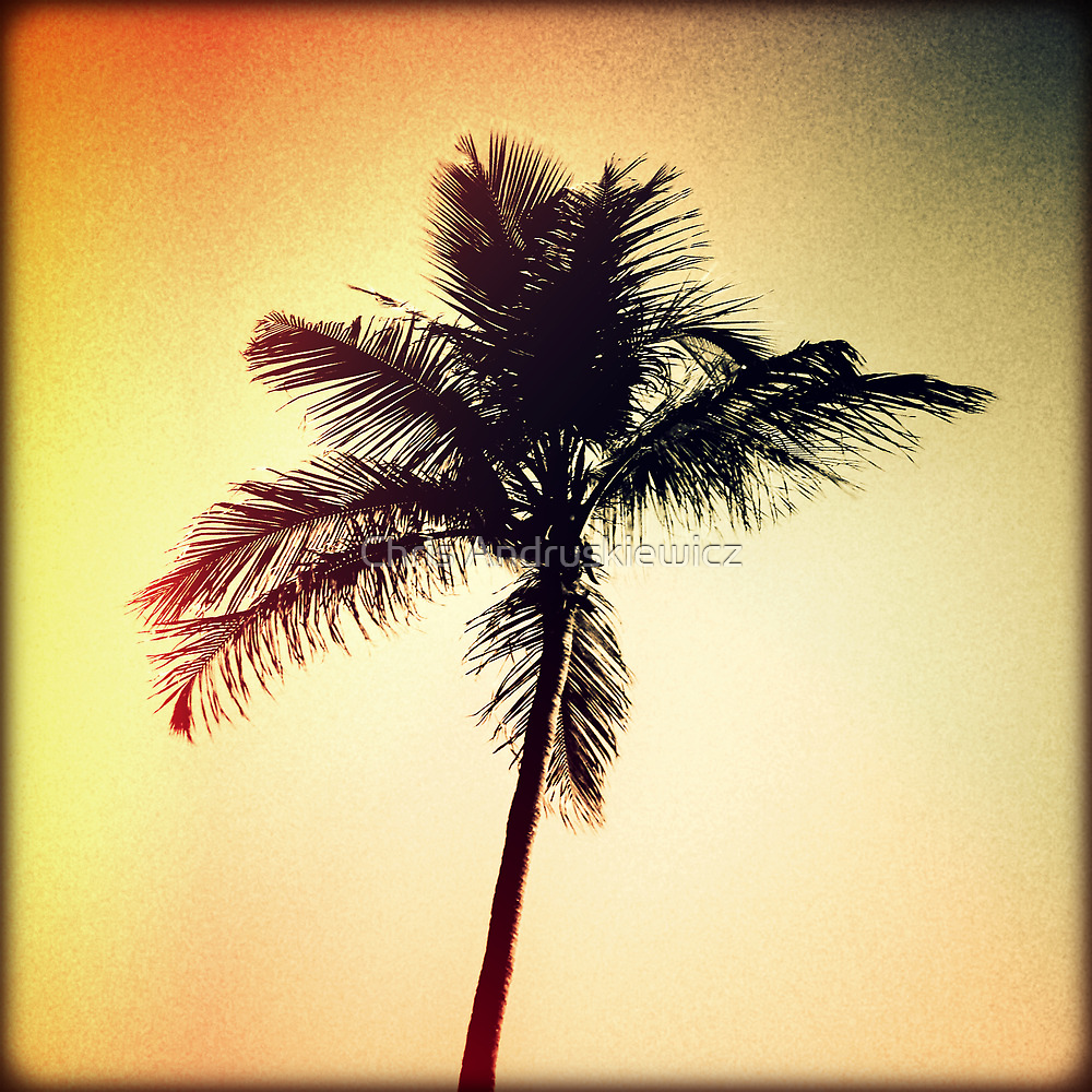 Palm Silhouette Sunset by Chris Andruskiewicz