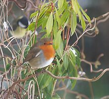 Winter Robin by Gerry Allen