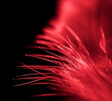 White feather Red light by ArtByRM