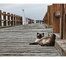 Cat Pier  Photographic Print