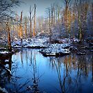 White Oak Swamp by Betty Maxey