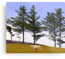 The Cow And The Lonesome Pines Metal Print