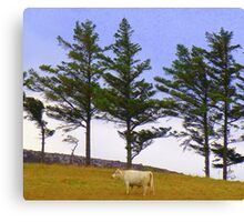 The Cow And The Lonesome Pines Canvas Print