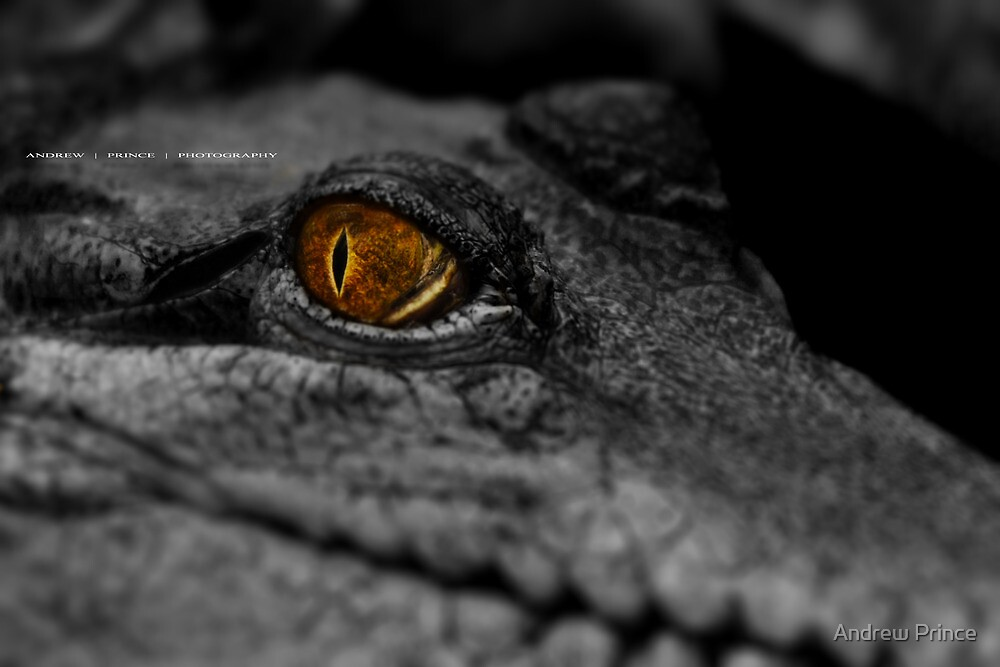 Looking at you ! by Andrew Prince