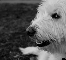 Dogs Eye View by LaurelMuldowney
