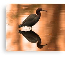 An almost perfect reflection! Canvas Print