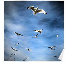 Sea Gulls Poster