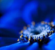 Blue Moon.  by Sherstin Schwartz