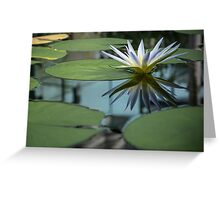 Blue Nile Waterlily Greeting Card