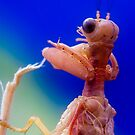 Mantid Lacewing _Close up  by Normf