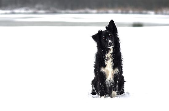 Snow Model by Karen Havenaar