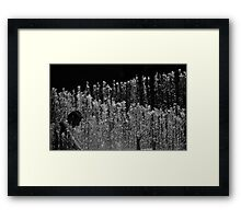 Water Spouts Framed Print