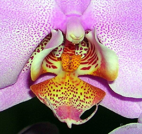 A human being isn't an orchid by Segalili