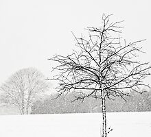 Silent winter by Anne Staub