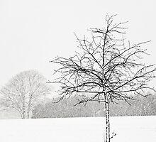Silent winter by Anne Staub
