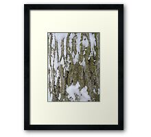 Snowy Bark Framed Print