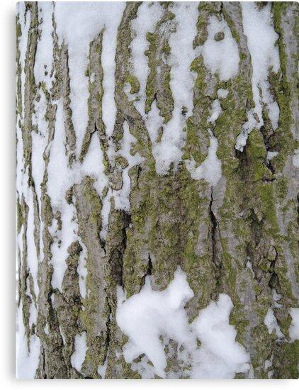 Snowy Bark by CreativeEm