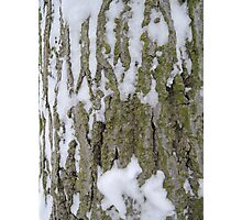 Snowy Bark Photographic Print