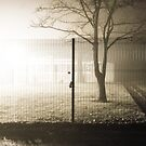 A Fogged Up Evening by AndrewBerry