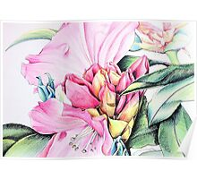 Rhododendron Flower Beauty Poster
