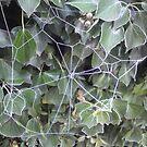 Cobweb on a frosty Morn by JulieB195