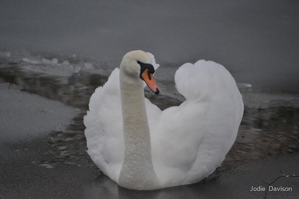 Frozen Swan Lake by Jodie  Davison