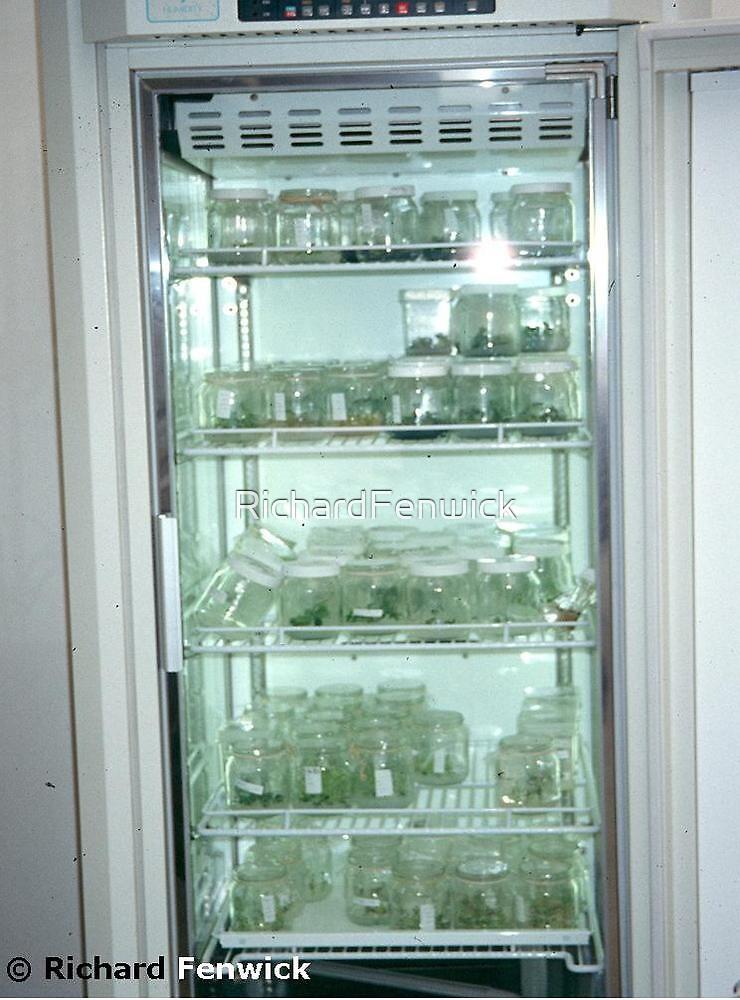 Growth cabinet by RichardFenwick