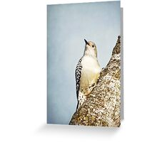 Red-Bellied Woodpecker ~ Greeting Card