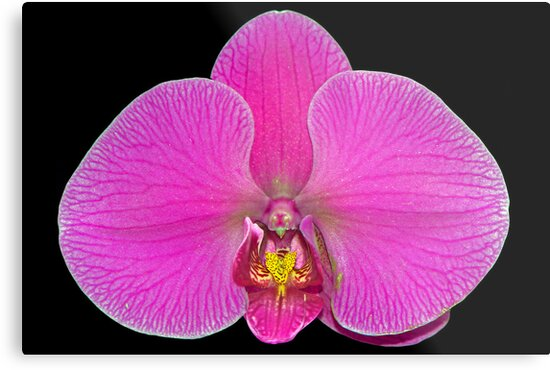Orchid - Up Close and Bright by cclaude