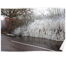 Ice and trees Poster