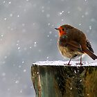 The Watcher of Winter by Simon Brown