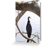 Anhinga - Everglades National Park Greeting Card