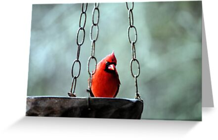 Mr. Cardinal by DottieDees