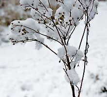 Snow Tufts by JEZ22