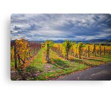 Vineyard Vibrance Canvas Print