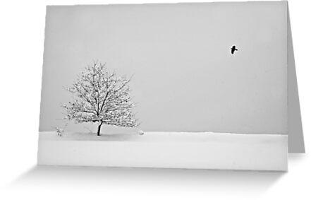 Tranquility by Aleš Sotelšek